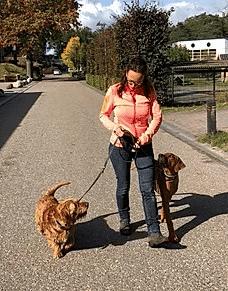 hond trekt aan de lijn