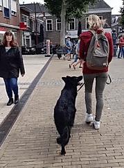 hond fel tegen katten