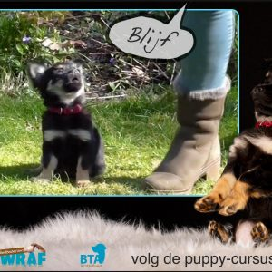 Puppycursus online